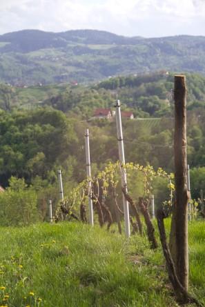 Styria Vines