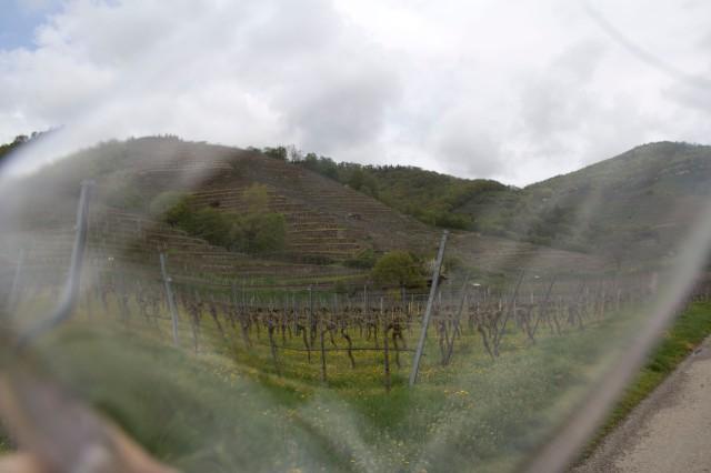 Through wineglass at Tegeernserhof vines