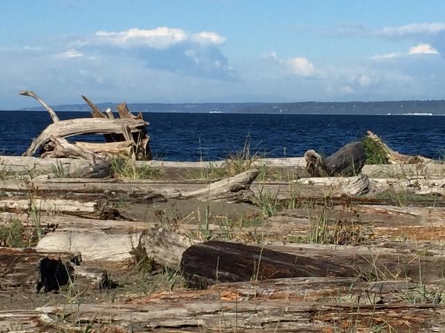 beach_driftwood